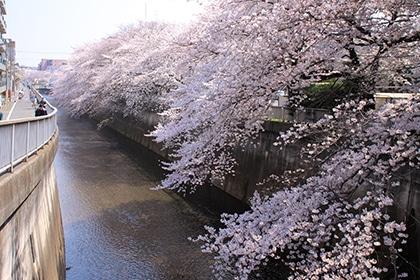 石神井川(約220m・徒歩3分)